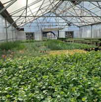 July Greenhouse