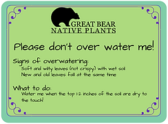 Don't Overwater Me! 8_edited.png