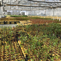 View of the Greenhouse