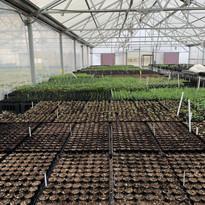 Greenhouse 3