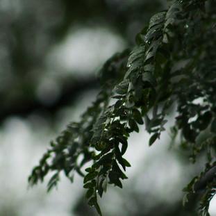 Rain - A photo series 3/3