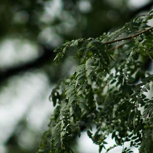Rain - A photo series 2/3