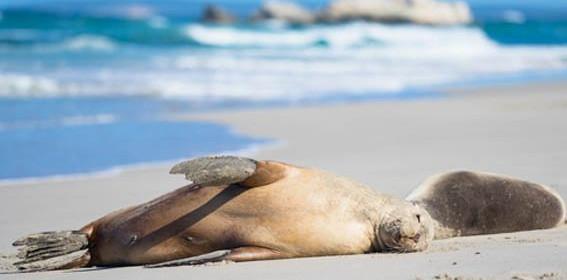 Kangaroo-Island-walk-12.jpg