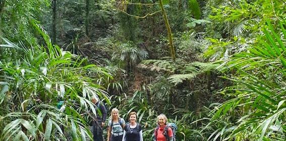 Gold-Coast-Hinterland-walk-Queensland-9.