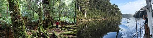 tarkine-walk-tasmania.jpg