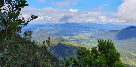 Gold-Coast-Hinterland-walk-Queensland-8.