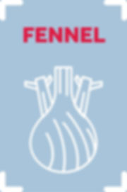Fennel_scaled.jpg