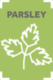 Parsley_scaled.jpg
