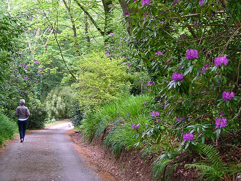 Meditative walking path in woods with flowers