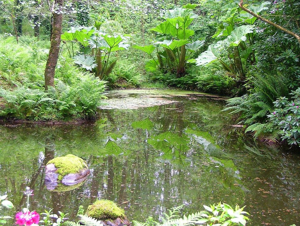 embraceyogaandhealth.  Meditative pond in woods