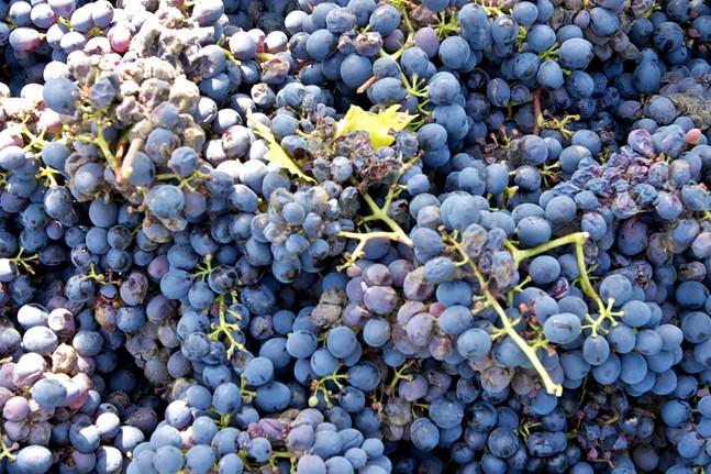 Agriturismo Fattoria Celle - sangiovese wine