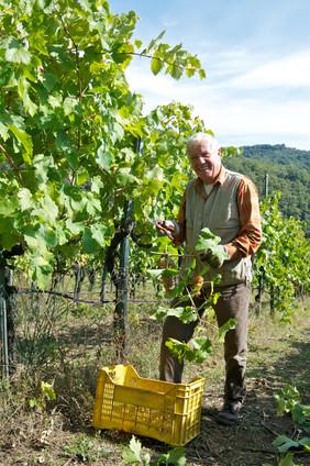 Agriturismo Fattoria Celle - vineyards