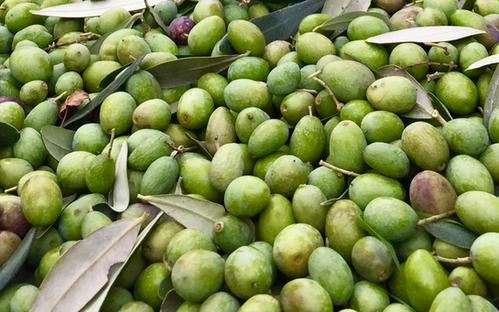 Agriturismo Fattoria Celle - extra vergin olive oil
