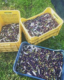 Agriturismo Fattoria Celle - extravergin olive oil
