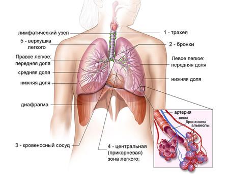 С заботой о дыхательной системе
