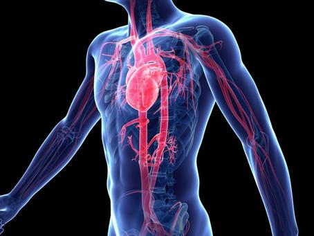 Восстановление системы кроветворения