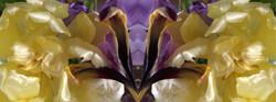 creating newflowers3-2fach