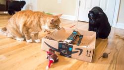 Stalking prey behind the box