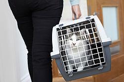 calm cat in carrier/ Wix Bigstock Image