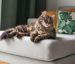 Happy cat in home | adam-stefanca-1259372-unsplash.jpg