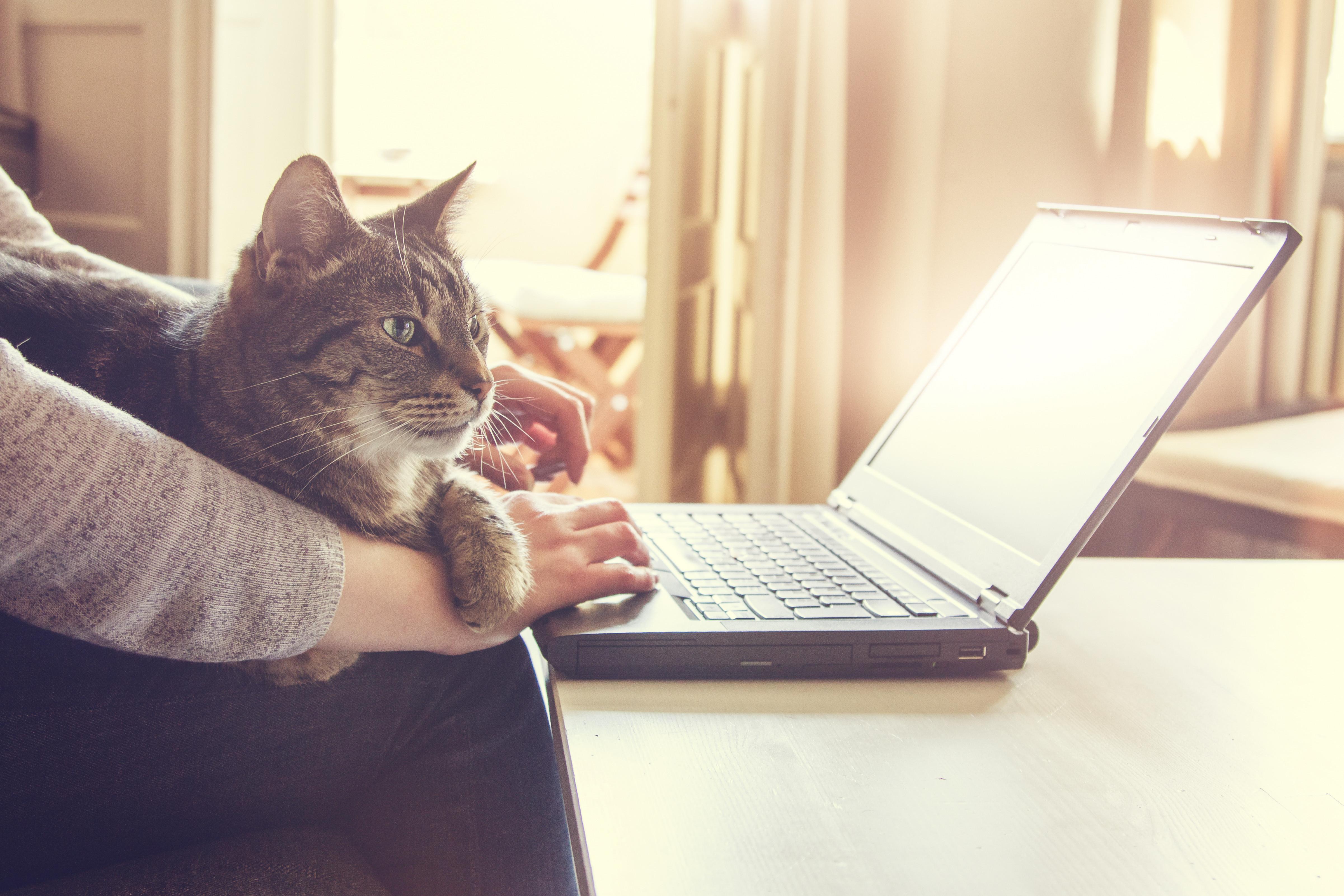 Online Behavior Consult Session