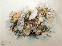Untitled [Pebbles & Shells]