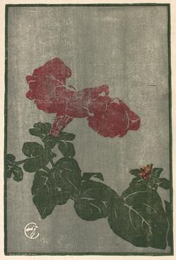 Boies Hopkins.Petunia