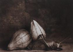 'Grasshopper and Tomatillas'