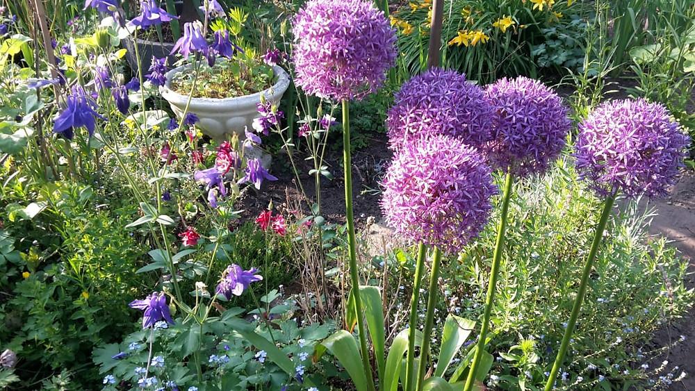 Der wunderschöne Garten vom Natuerlichen Welt Team Mitglied Annette