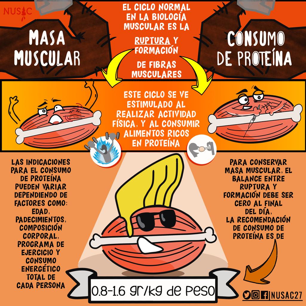 Consumo de proteinas al dia