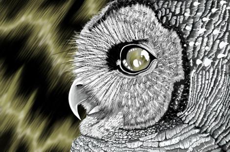 Owls Gaze