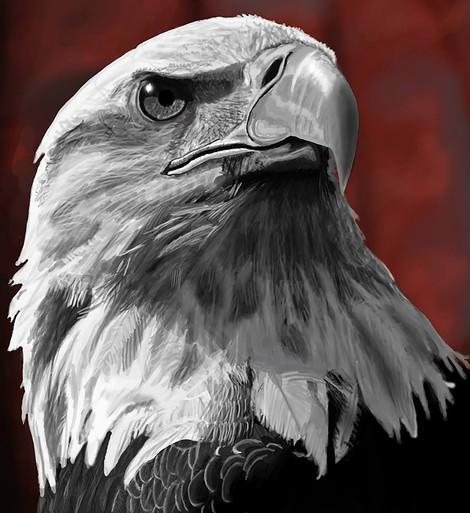 Eagles Stare