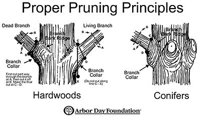 pruning_pic.png