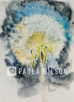 Dandelion Clock No.2