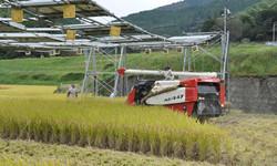 田んぼの発電所で米が育つ