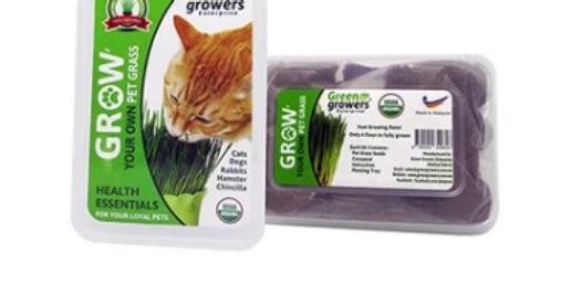 Waggy Woffie Pet Grass, Self Grow Kit