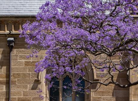 A Purple Church?