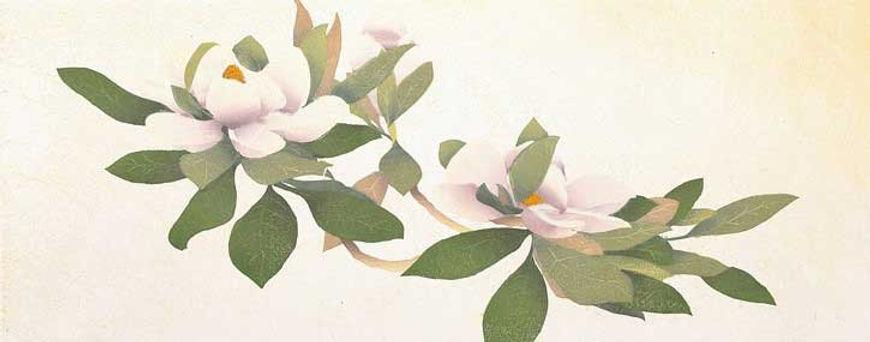 Magnolia_main.jpg