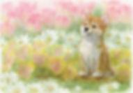 iikotoarisou_tsuchida.jpg