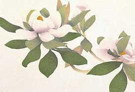 Magnolia_main_yokohamaTopS.jpg