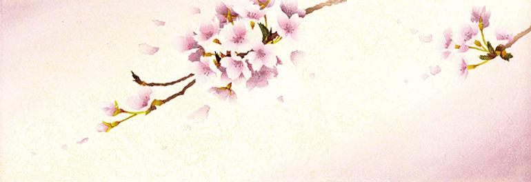 sakura-9.jpg