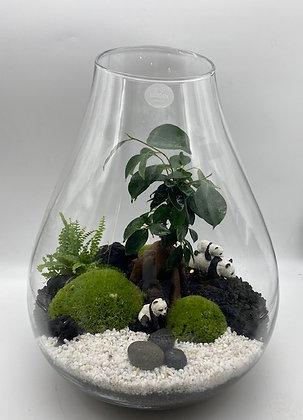 Terrarium Flora