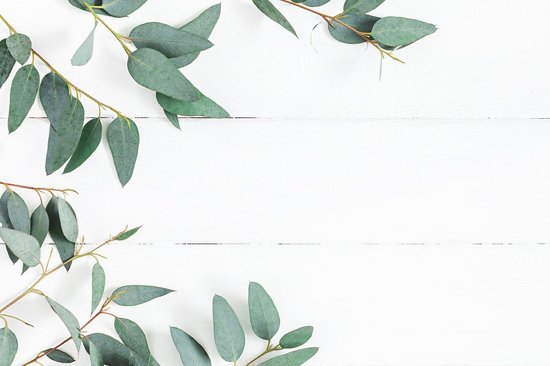 Eucalyptus leaves on white background. Frame made of eucalyptus branches. Flat lay, top vi