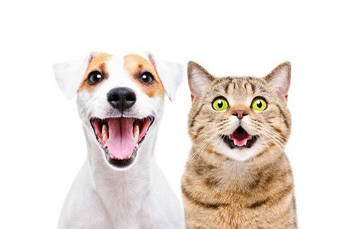 Adopt Me Dog and Cat.jpg
