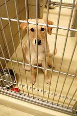 Dog in Shelter 1.jpg