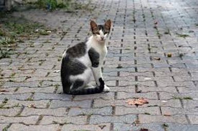 lost cat 1.jpg
