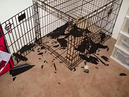 Dog Chewed Crate.png