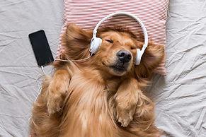 Dog listening to music.jpg