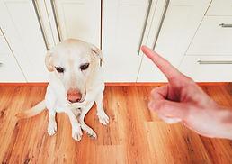 Dog getting yelled at.jpg