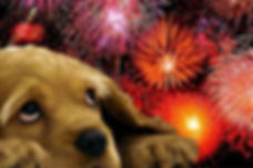 Dog and Fireworks 3.jpg